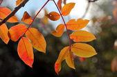 Fall colors — Stock Photo