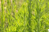 Taze büyüme — Stok fotoğraf