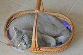 Cat in a basket — Stock Photo