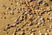 Sea shore texture — Stock Photo