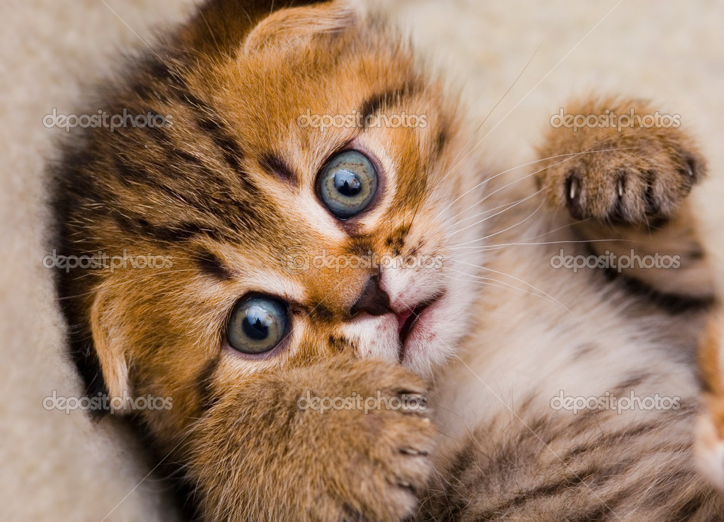 Little kitten close up, shallow DOF — Stock Photo #1192311