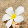 Shell & flower on a beach — Stock Photo #1216768