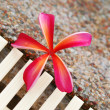 Frangipani — Stock Photo #1248617