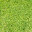 Green grass background — Stock Photo #1537439