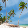Caribbean wild beach — Stock Photo