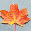 Photo: Autumn maple leaf