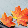Foto Stock: Autumn maple leaf