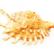 Shell - Stock Photo