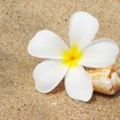 Shell & flower on a beach — Stock Photo