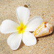 Shell & flower on a beach - Stockfoto