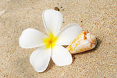 Shell & flower on a beach — Zdjęcie stockowe