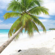 caribbean beach — Stock Photo #1707680