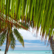 Caribbean beach — Stock Photo #1707709