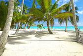 カリブ海のビーチ — ストック写真