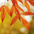 Autumn leaves background — Foto de stock #1726930