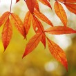 Autumn leaves background — Stockfoto #1726930