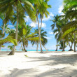 caribbean beach — Stock Photo #1728965