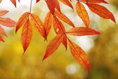 Autumn leaves background — Stockfoto