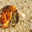 Hermit Crab on a beach - Stock Photo