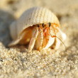 Stock Photo: Hermit Crab on a beach