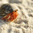 Hermit Crab on a beach — Stock Photo #1825847