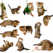 Kitten collection — Stock Photo