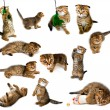 Kitten collectie — Stockfoto