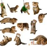Kitten collection — Stock Photo
