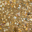 Splinters of shells — Stock Photo