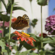 The butterfly pollinating a flower. — Stock Photo