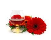 Cognac and red flowers — Stock Photo