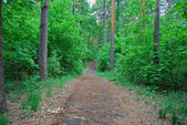 Road to wood — Stock Photo