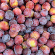 Plum — Stock Photo #1614705