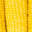 Extreme close up of yellow corn cobs — Stock Photo #1244188