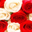 Background of the red and white roses — Stock Photo #1244249