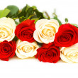 图库照片: Red and white roses isolated on white