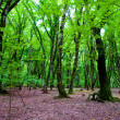 Nature concept - Green forest - Stok fotoğraf