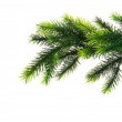 Close up of fir tree branch isolated — Stock Photo #1244698