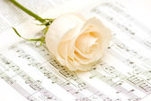 White rose on the musical notes page — Stock Photo