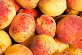 Many colourful red apricots — Stock Photo