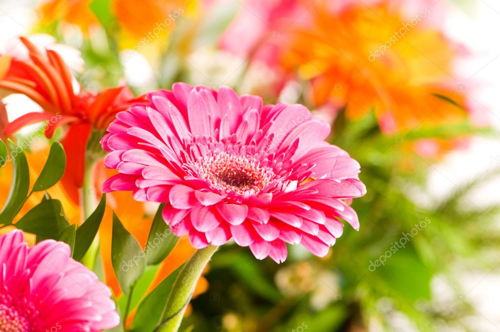 Red gerbera flower agaisnt green blurred background — Stock Photo #1245151