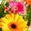 Yellow gerbera flower agaisnt green blur — Stock Photo #1255753
