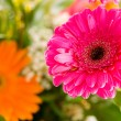 Stock Photo: Red gerbera flower agaisnt green blurred