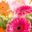 Red gerbera flower agaisnt green blurred - Stock Photo