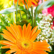 Gerbera flowers — Stock Photo