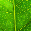 Very extreme close up of green leave — Stock Photo