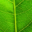 Very extreme close up of green leave — Stock Photo #1634275
