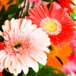Royalty-Free Stock Photo: Gerbera flowers