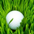 Golf ball on the green grass — Stock fotografie #1634697