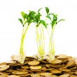 Green seedling growing from the coins — Stock fotografie